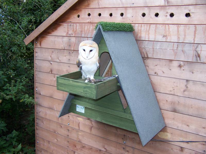 Forest Green Barn Owl Box w/ Shelf - The Owl Box